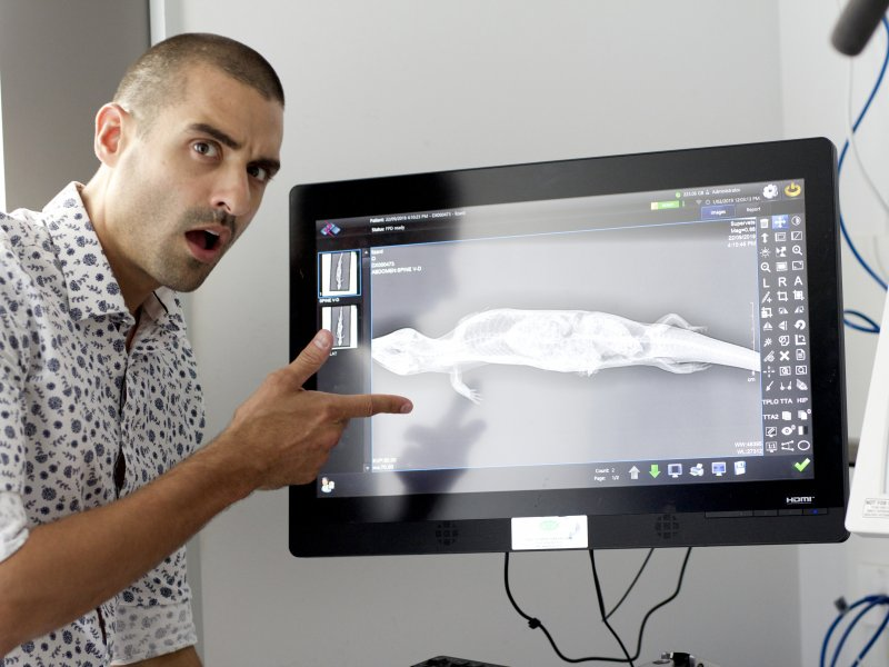 Endoscopy Radiology Ultrasound