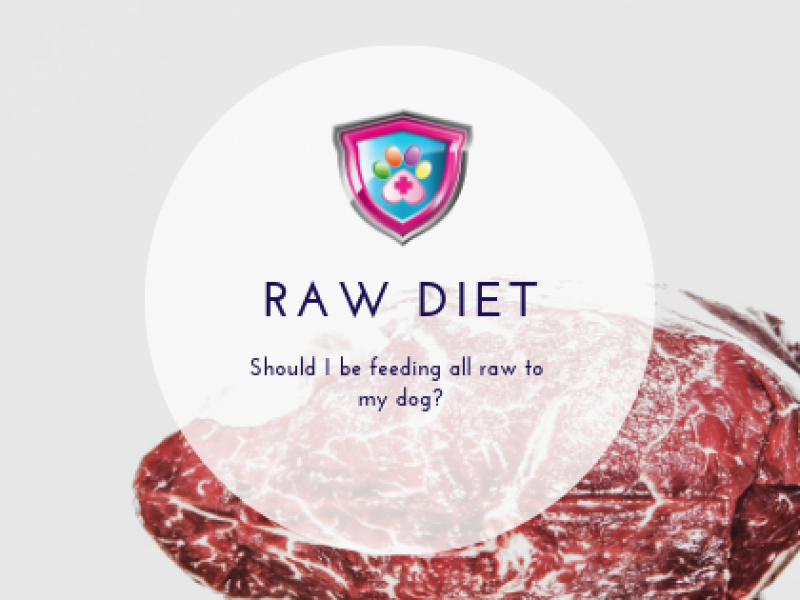 Raw Diet Should I be feeding all raw to my dog?
