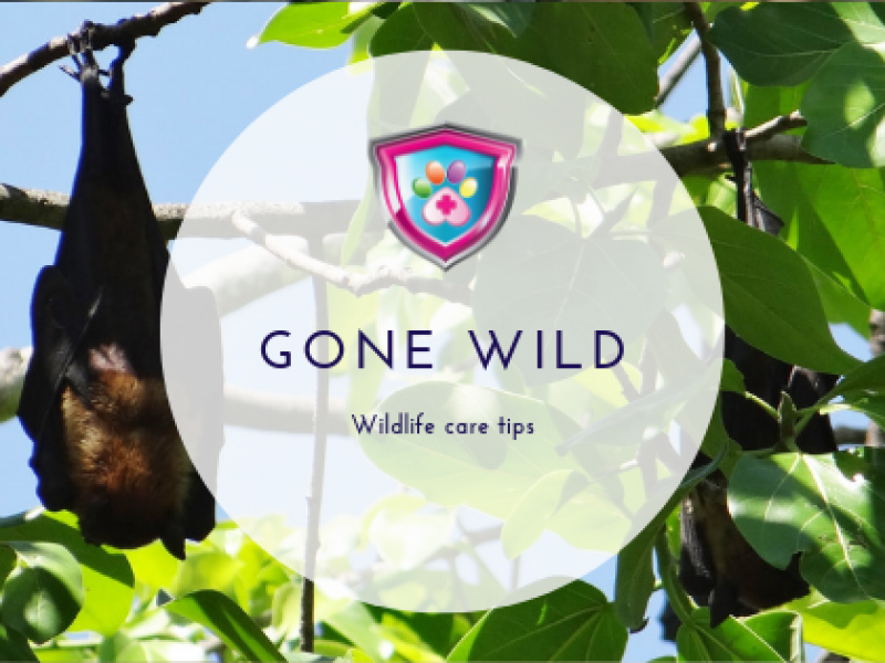 Gone Wilde Wildelife Care Tips